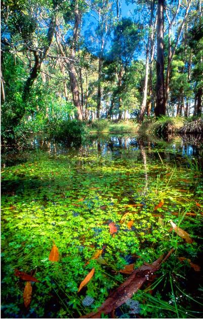 The swampy origins of the Moorabool River