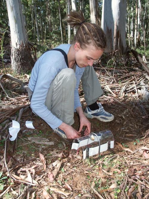 Volunteer installing ground hair tube
